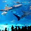 新江ノ島水族館と八景島シーパラダイスはデートならどっち?